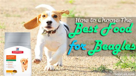 best food for beagles best beagle food 5 healthy and tasty products chicpin