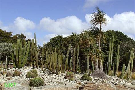 botanic gardens auckland cactus picture of auckland botanic gardens auckland