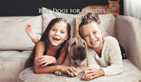 best dogs for 16 best dogs for families with for the safety of and pets