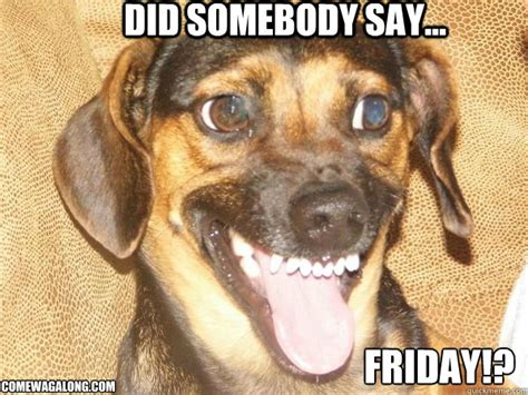 Dog Friday Meme - happy friday dog memes image memes at relatably com