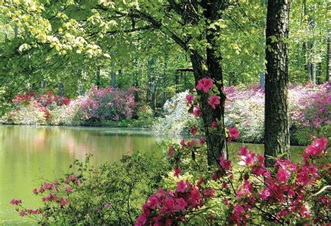 Callaway Gardens by Azalea Season At Callaway Gardens Atlanta Magazine
