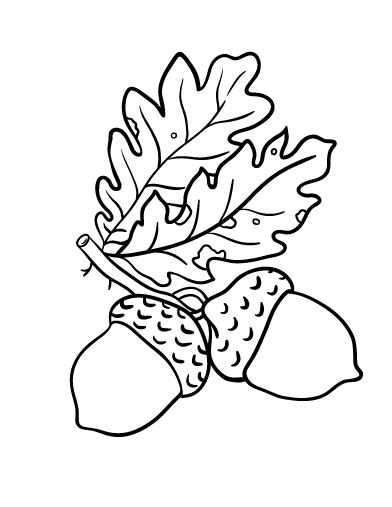 coloring page of acorn acorn coloring sheet for preschoolers coloring pages