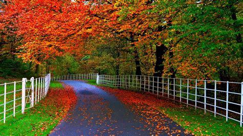 hutan wallpaper taman pohon daun jalan pagar
