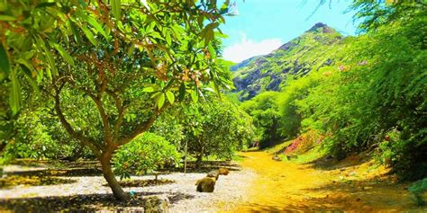 Koko Botanical Garden Koko Crater Botanical Garden Weddings Get Prices For Wedding Venues