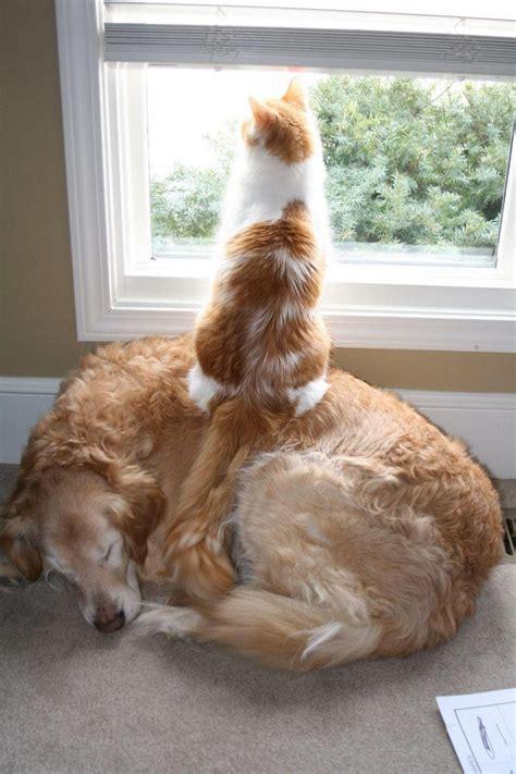cat sitting on pixdaus