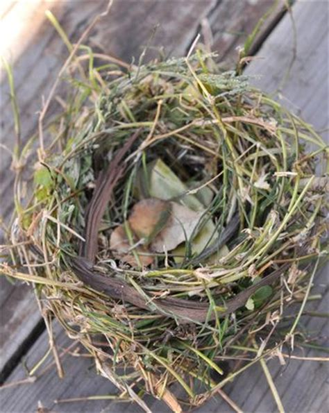 the birdmaker s nest where your treasure will be found safe and sound books make like a bird and nest nests science activities for