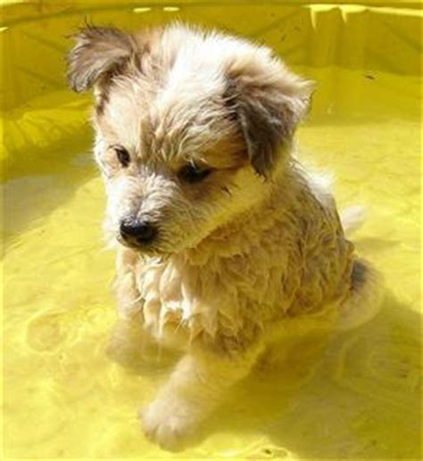 calm puppy calm non non shedding large breeds breeds picture