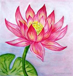 Realistic Lotus Flower 40 Beautiful Flower Drawings And Realistic Color Pencil
