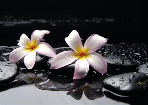 imagenes blancas y negras para bebes imagenes de flores negras y blancas imagui