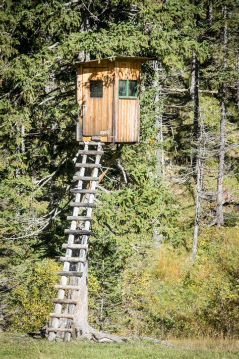 tiny tree house 37 pictures of super fun kids tree houses