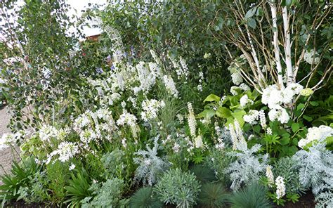 white flowers garden white garden the best plants to create a white border
