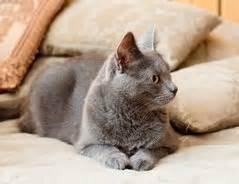 katze kotet ins bett warum pinkelt meine katze ins bett