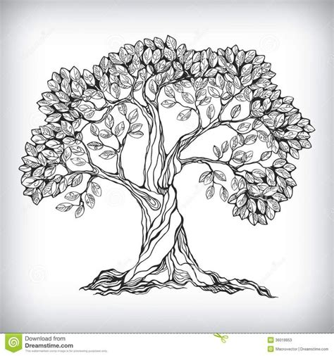 line drawings trees 25 best ideas about oak tree drawings on