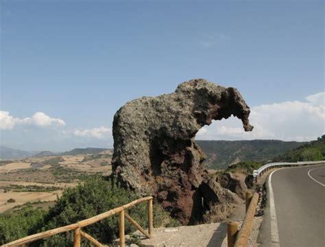 cornici strane stranezze della natura a forma di fallo elefante o fungo