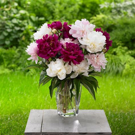 How To Keep Cut Flowers Fresh In Vase by 17 Baking Soda Uses In The Garden Baking Soda For Plants