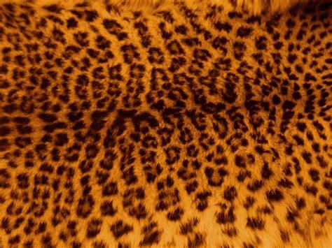leopard pattern image free photo leopard skin fur pattern print free