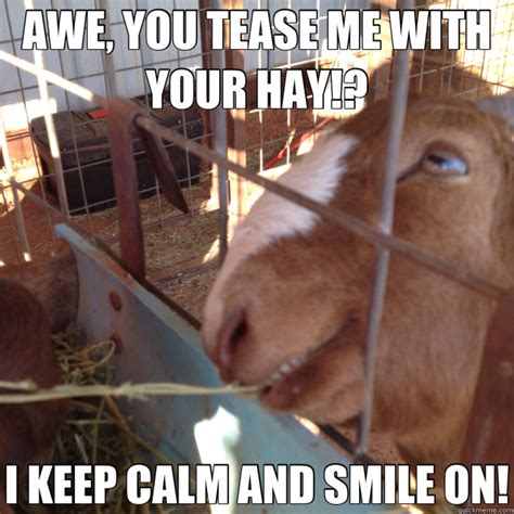 Tease Meme - awe you tease me with your hay i keep calm and smile on