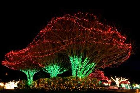 easy outdoor christmas lights 15 great sources of