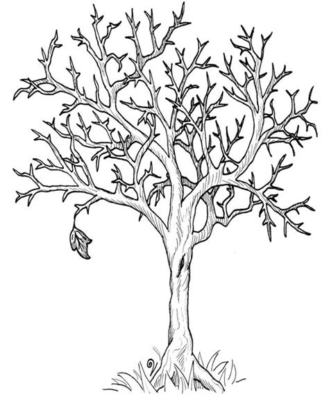 tree leaf coloring pages coloring pages of trees with leaves coloring home