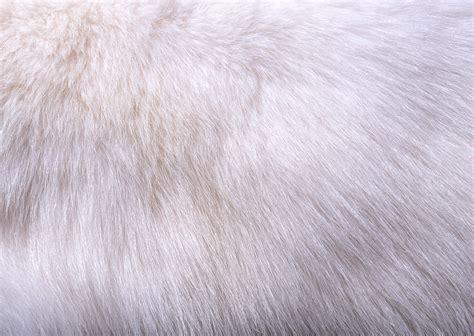 pink fur wallpaper for bedrooms 183 fur wallpaper wallpapersafari