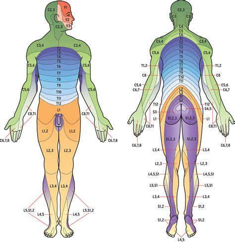lumbar 4 and 5 diagram leonard dickinson