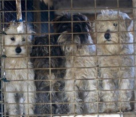 missouri puppy mills humane society quot right to farm quot bill would protect puppy mills block anti cruelty