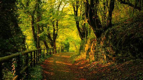 download colorful autumn 3d live wallpaper free for free 3d nature autumn hd photography great wallpapers download