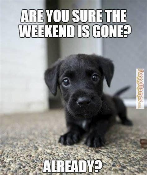 Weekend Dog Meme - funnymemes com animal memes weekend is gone bank