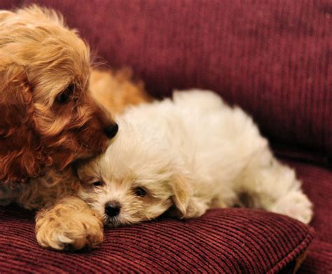cuddling puppies photography inspiration puppy pictures to melt your naldz graphics