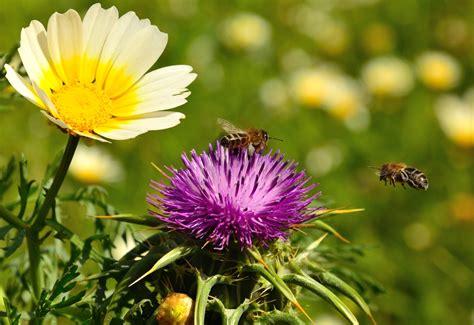 wur bloemen biologische bestrijding krijgt wind mee wur