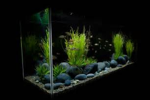 Aquarium Decoration Ideas Freshwater Image Freshwater Aquarium Design Ideas Download