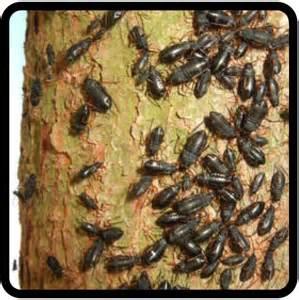 adopt a bug for christmas giving love to chrismas tree
