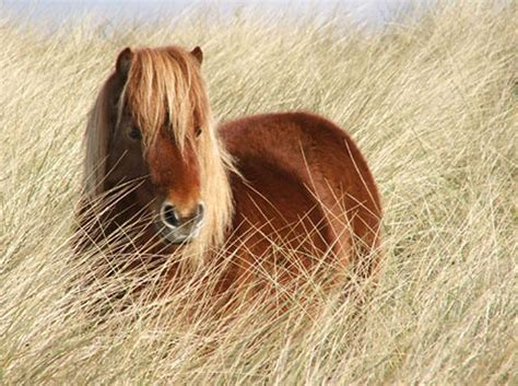 brown pony hd animals wallpapers backgrounds of horses