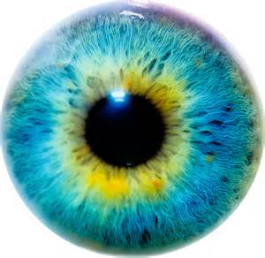 iris eye color file eye i jpg simple the free