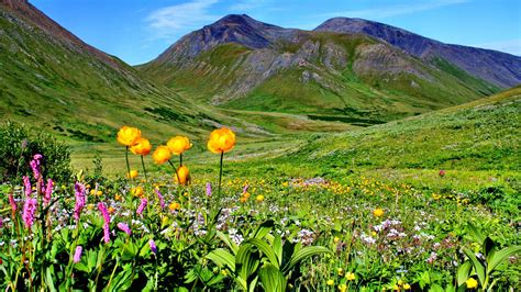 win with flower mountain meadow with flowers and green grass mountains