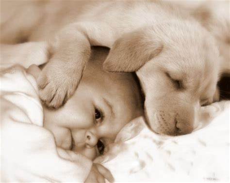 puppy and baby and dogs a special bond cuteness overflow
