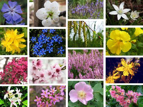 tutti i fiori mondo al mare coi corsi di e meditazione al conero azzurro