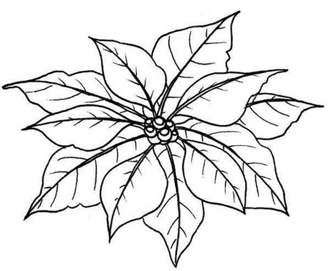 coloring page christmas flower 41 best angels images on pinterest poinsettia coloring