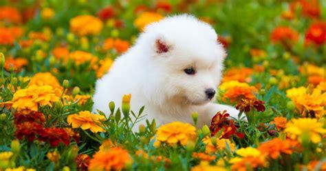 giardini per cani creare una lettiera in giardino per cani e gatti greenstyle