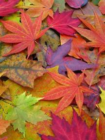 colorful autumn leaves pictures photos and images for facebook tumblr pinterest and twitter