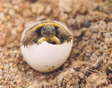 imagenes de animales que nacen del huevo de animales que nacen de huevos imagui