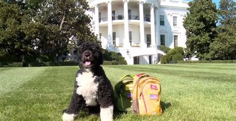 white house dog sunny white house dogs bo and sunny have an important message about keeping your pets safe