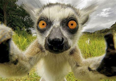 dog selfies cat selfies  animal selfies veterinary secrets blog  dr andrew