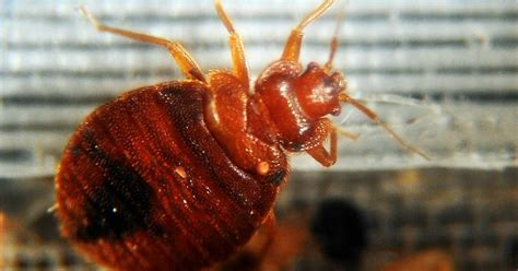 how bad is my bed bug infestation pest control services in miami fl miami dade county