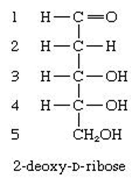 d ribose carbohydrates carbohydrate formation of methyl ethers biochemistry