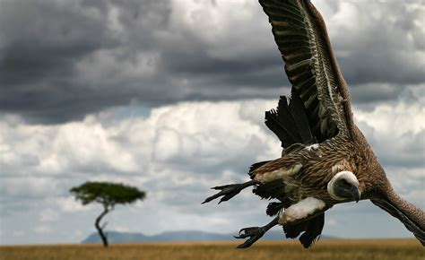 National Geographic Wildlife wildlife photography national geographic www pixshark