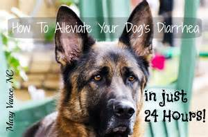 how to alleviate your dog s diarrhea in 24 hours mary vance nc