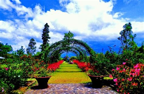 Bunga Mawar Alam Indah kebun mawar situhapa garut tempat yang pas untuk
