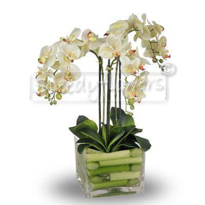 vasi per orchidee phalaenopsis composizione in vaso di orchidee phalaenopsis