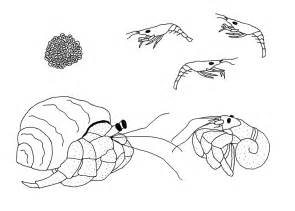 Pet Hermit Crab Coloring Page Coloring Pages Hermit Crab Coloring Pages